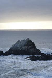 Птичий остров. Калифорния, 2007 год